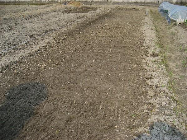 1.苗床の土慣らし.jpg