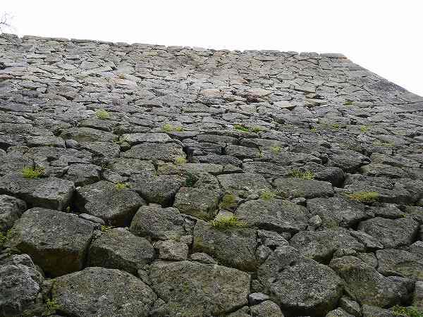 11.石垣を見上げる.jpg