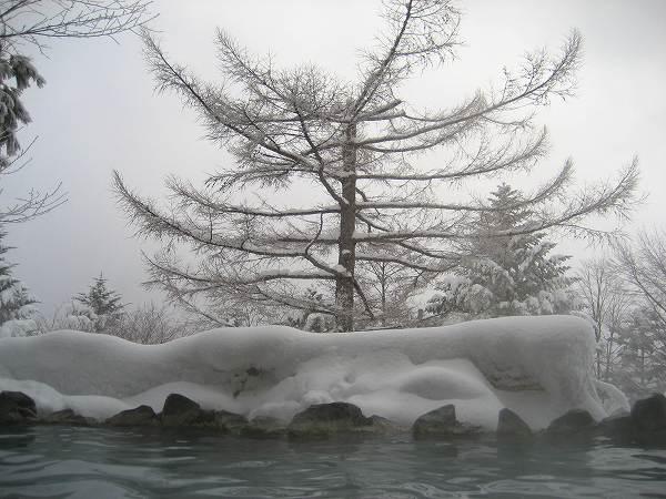 23.凍てつく梢に.jpg