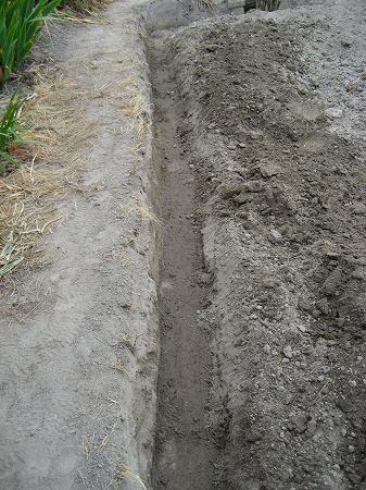 4.鍬で掘る.jpg