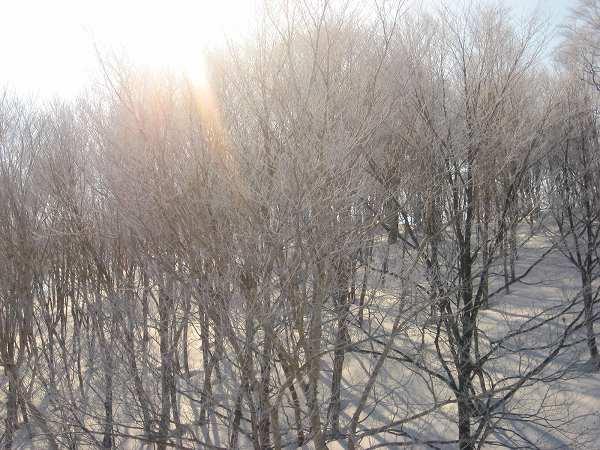 6.樹氷-1.jpg