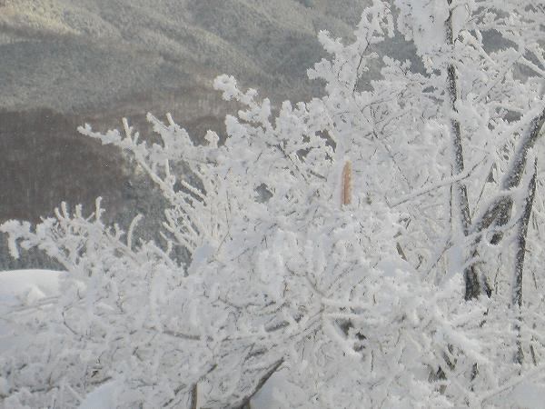 6.頂上(樹氷).jpg