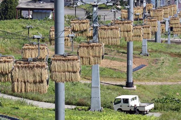 魚沼の天空干し_20140928産経新聞-1.jpg