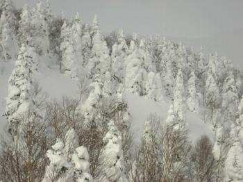 22.樹氷が綺麗.jpg