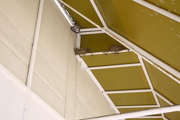 5.案内所の上には燕の巣.jpg