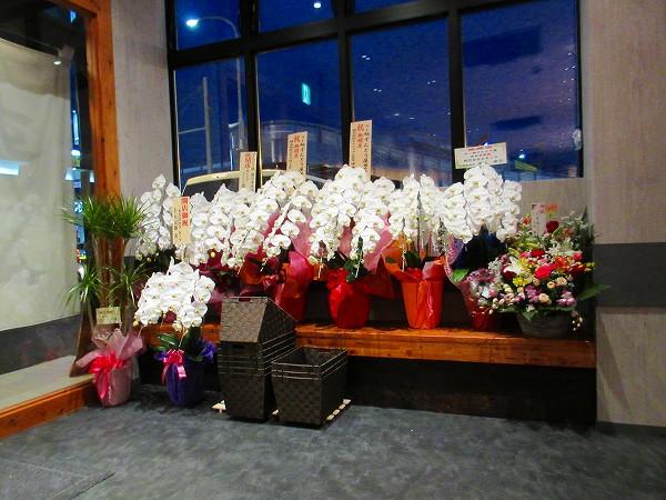 8.開店の蘭の花.jpg